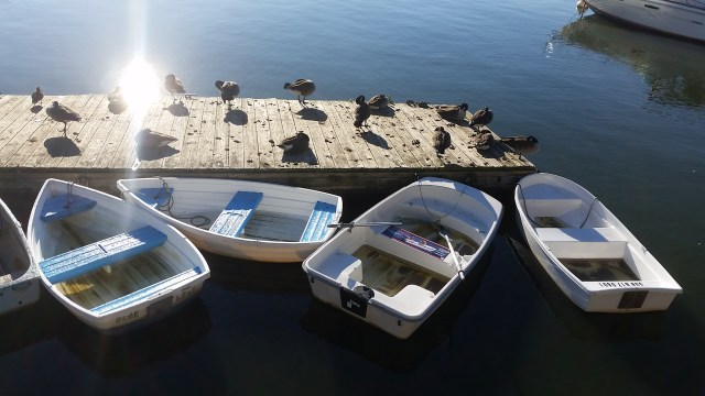 ducks-and-rowboats