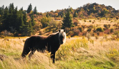 grayson highlands state park, picture of horse standing in a field at grayson highlands state park