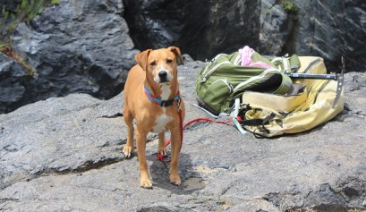 5 great tips for camping with dogs. picture of a dog on a mountain with a hiking back pack next to him, camping with dogs