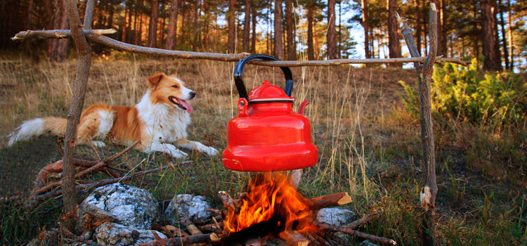 What To Consider When You Go Camping With Dogs, picture of a dog camping with a kettle boiling over a fire, camping with dogs