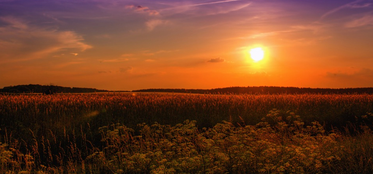 keeping cool in the summer heat, picture of a sunset on a hot summer day with a field and beautiful blue sky