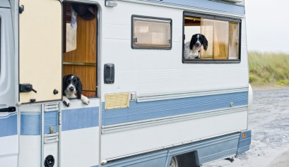 rv camping with dogs looking out window