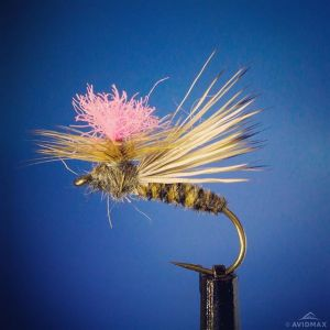 bloom-caddis