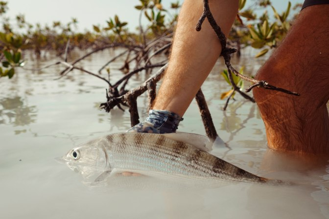 Saltware Bonefish