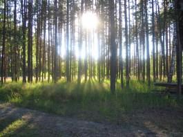 Forêt Ile de France