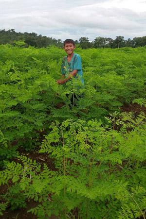 Baca-Villa-New-Organic-Moringa-Farm