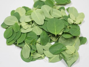 Fresh-Organic-Moringa-Leaves-Baca-1050-Villa