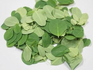 Fresh-Organic-Moringa-Leaves-Baca-1050-Villa