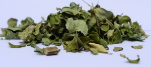Organic Moringa Tea leaves
