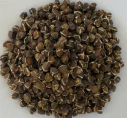 Moringa-Seeds-cleaned