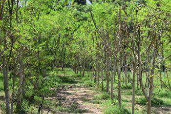 Moringa-Land-Baca-Villa-05-2015-2