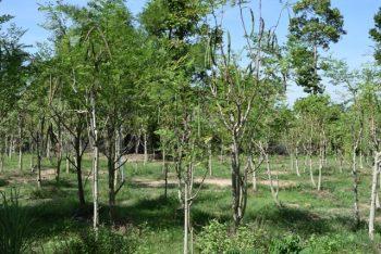 Moringa-Land-Baca-Villa-05-2015-5