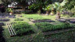 Moringa Nurcery Baca Villa