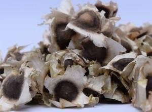 Seeds-Moringa-Oleiefra