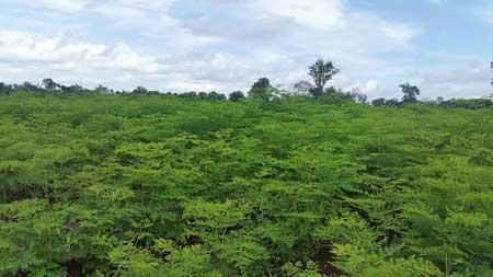 Moringa-Farm-Baca-Villa-rainseason-08-2016