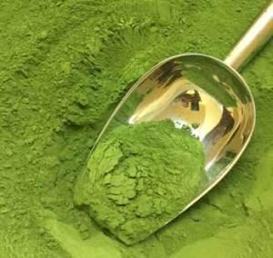 Finest-Organic-Moringa-Powder-Baca-Villa