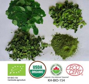 Fresh-Pre-Dry-Dry-Powder-Organic-Moringa-Baca-Villa