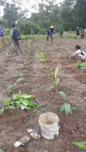 Organic-land-working