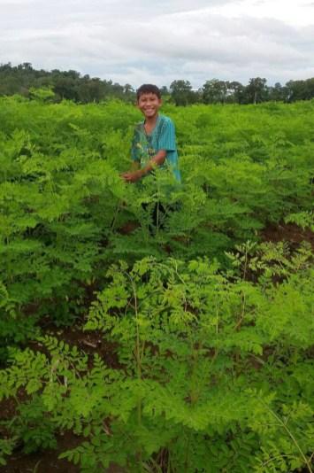 BCVL-Organic-Moringa-Farms