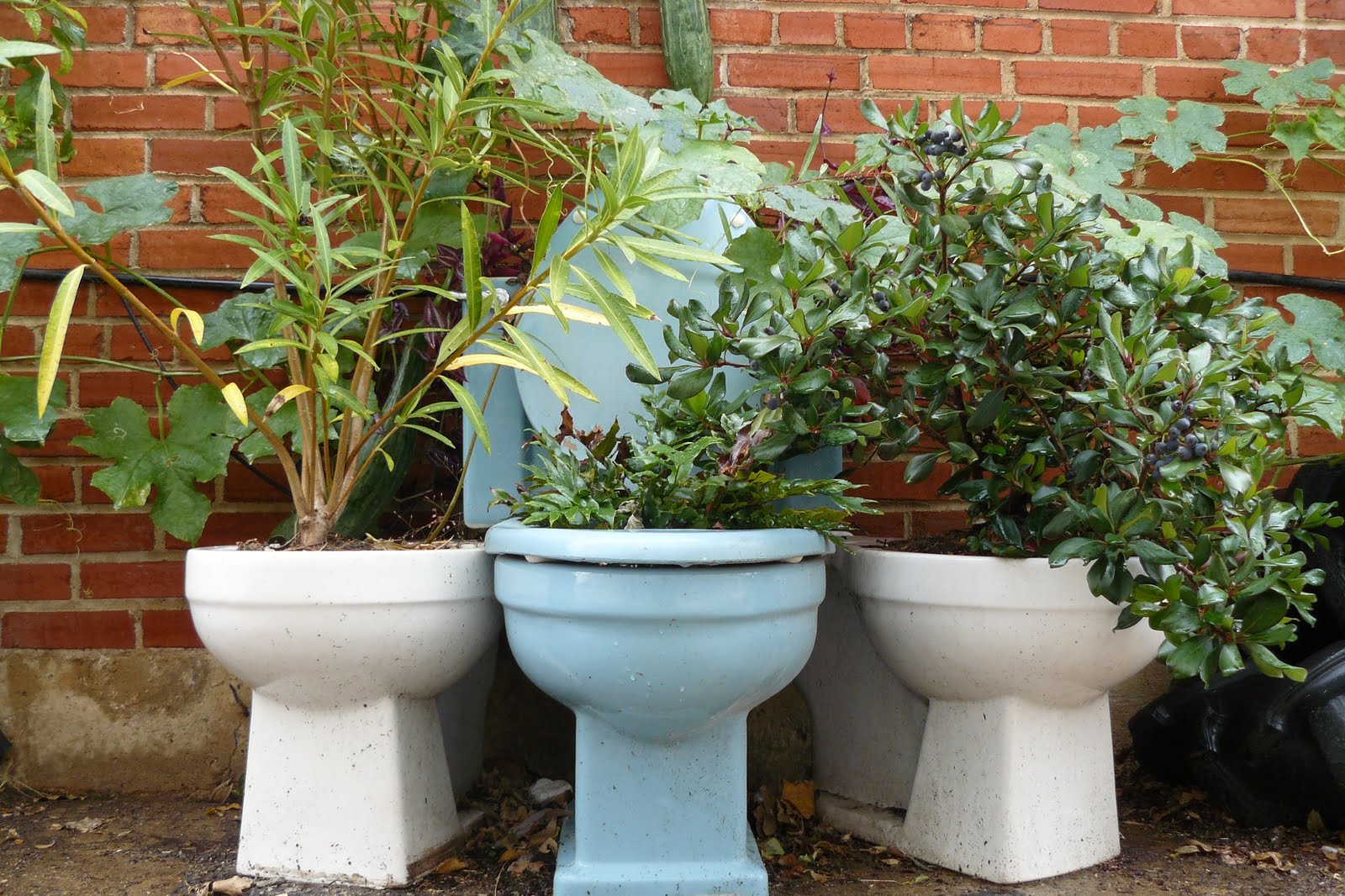 toilet bowl planter gardening creative diy