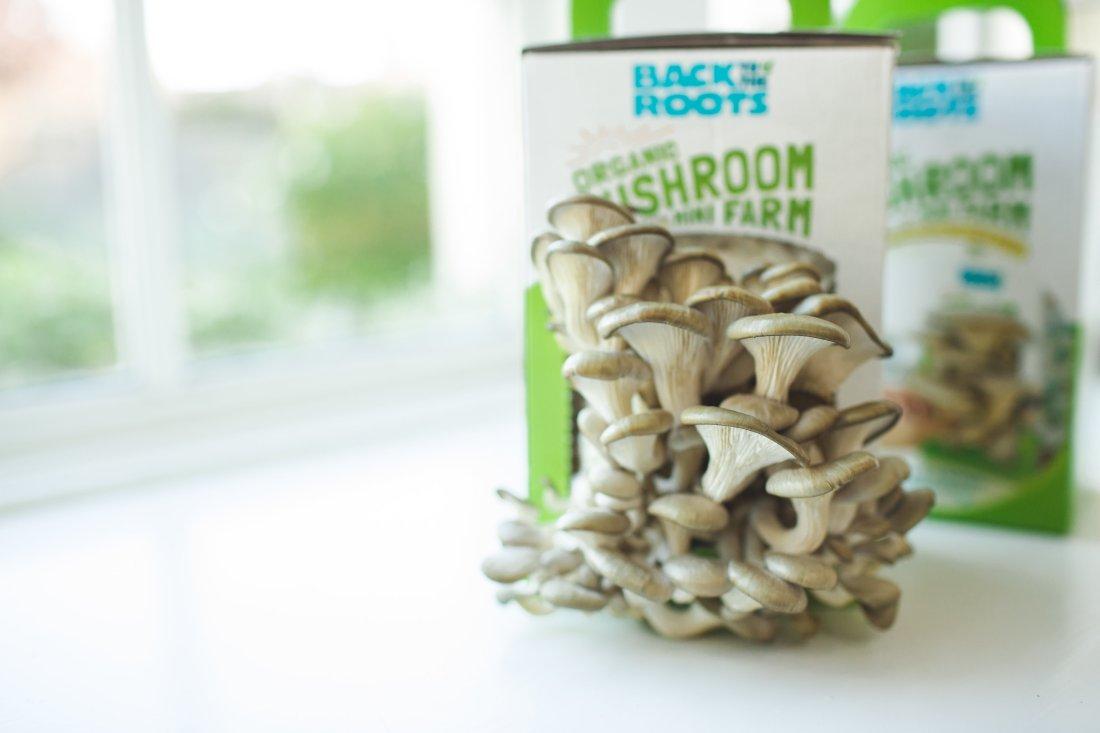 Organic Mushroom Grow Kit