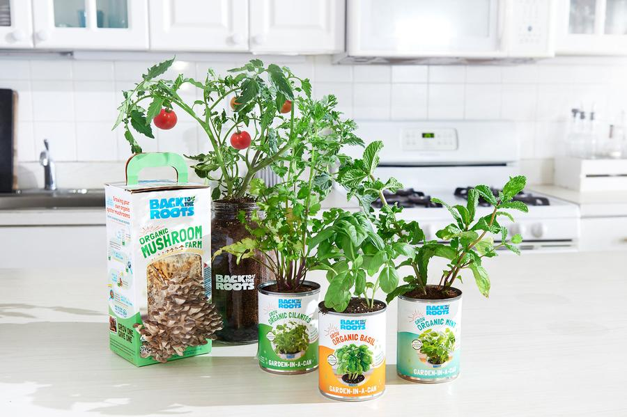Complete Windowsill Garden Kit