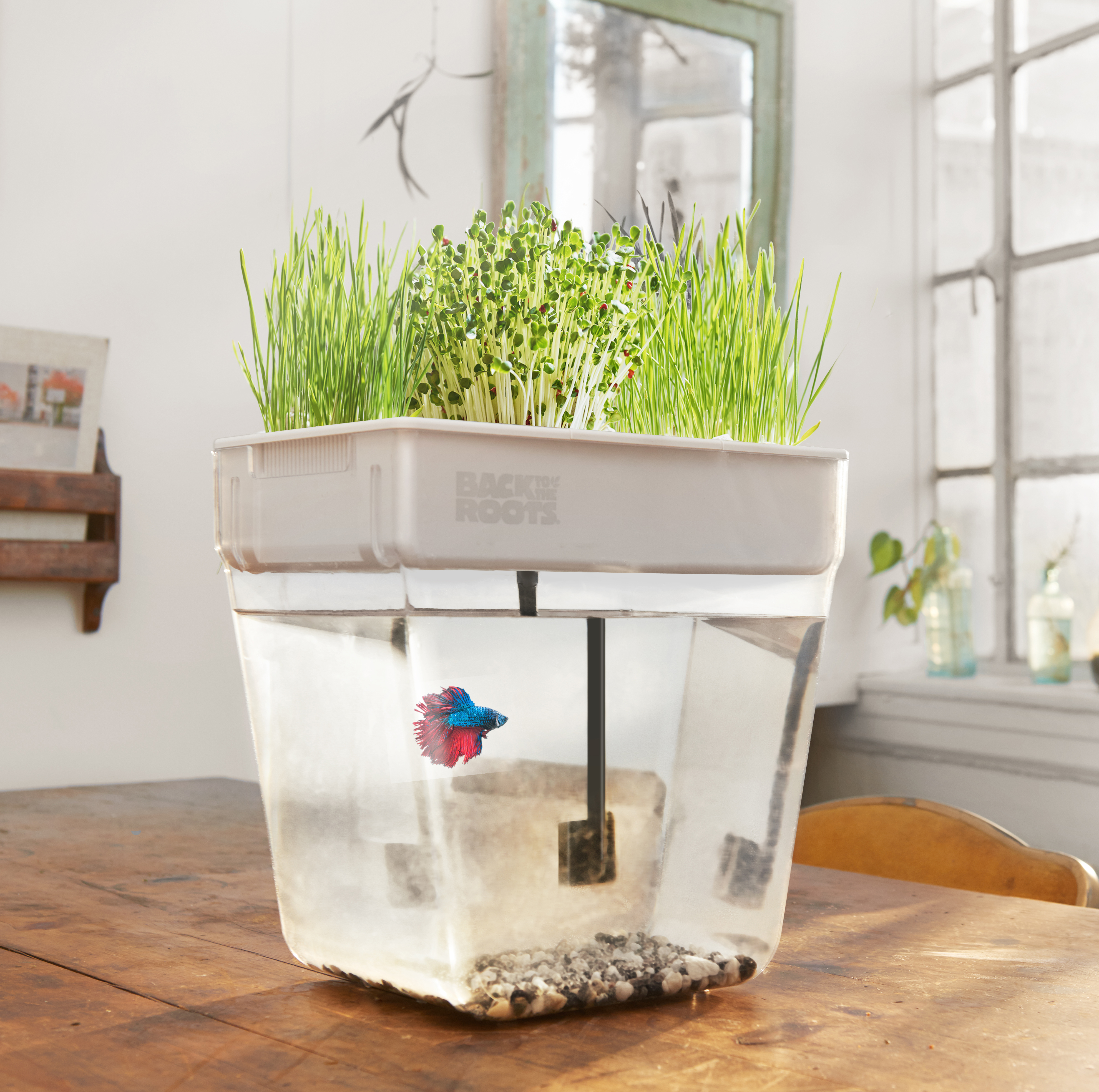 what temperature does your betta fish prefer back to the roots blog