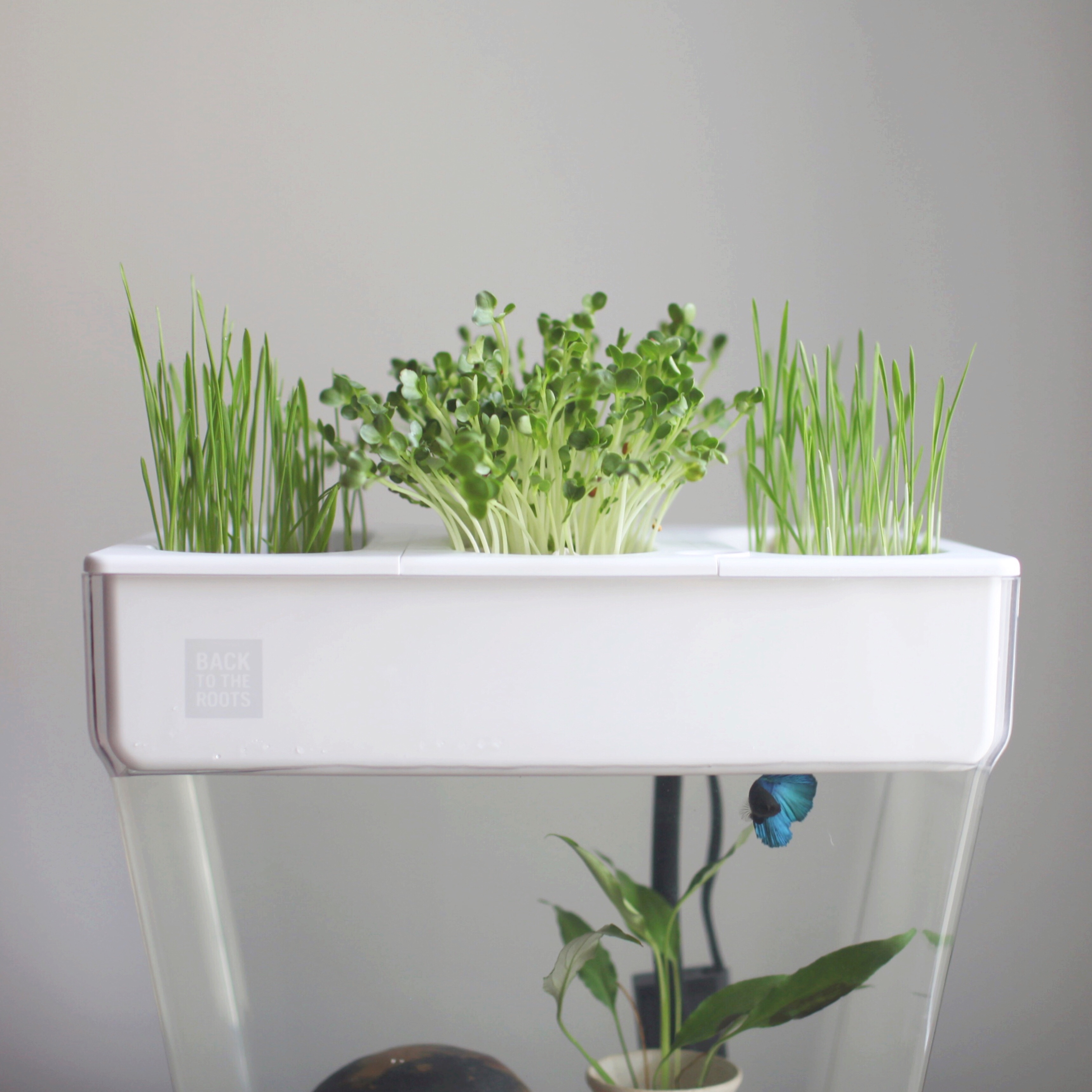 the future of food may be in your fish tank taking a look at