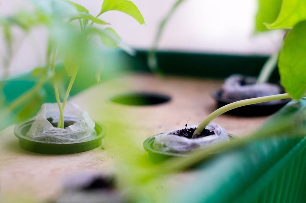 Small garden pods