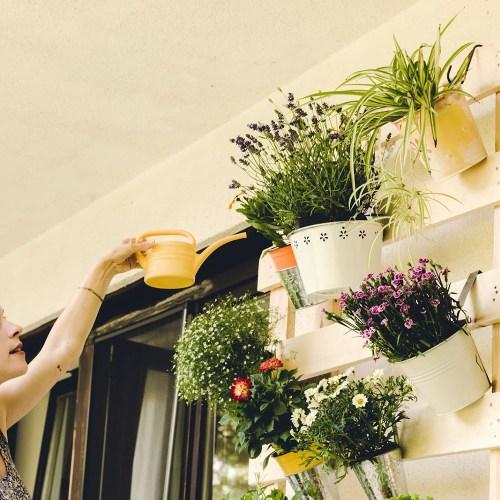 Millennial woman watering plants