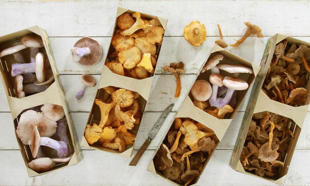 Mushroom varieties for a mushroom growing kit