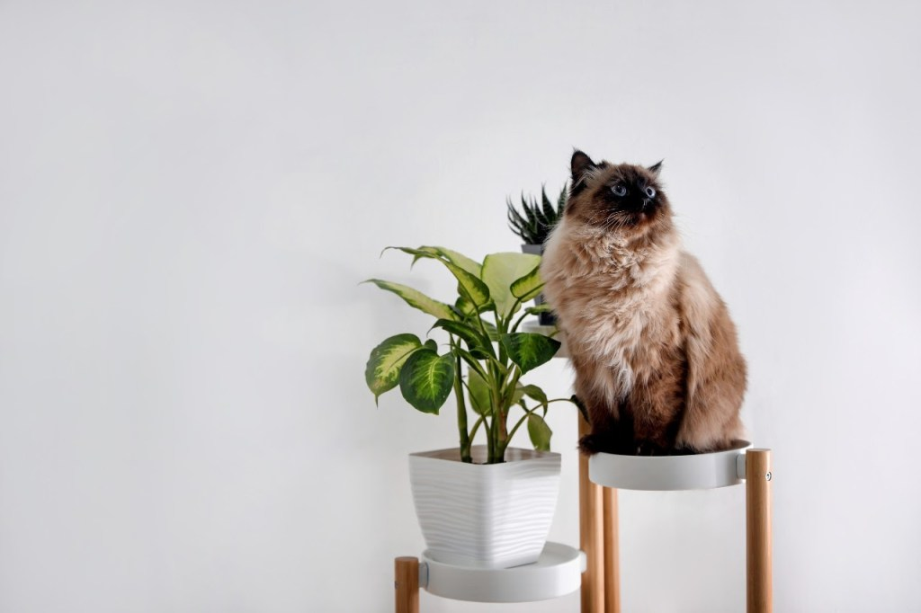 Plant stand with cat sitting next to it