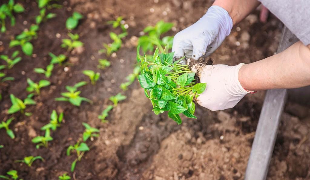 Planting an outdoor garden