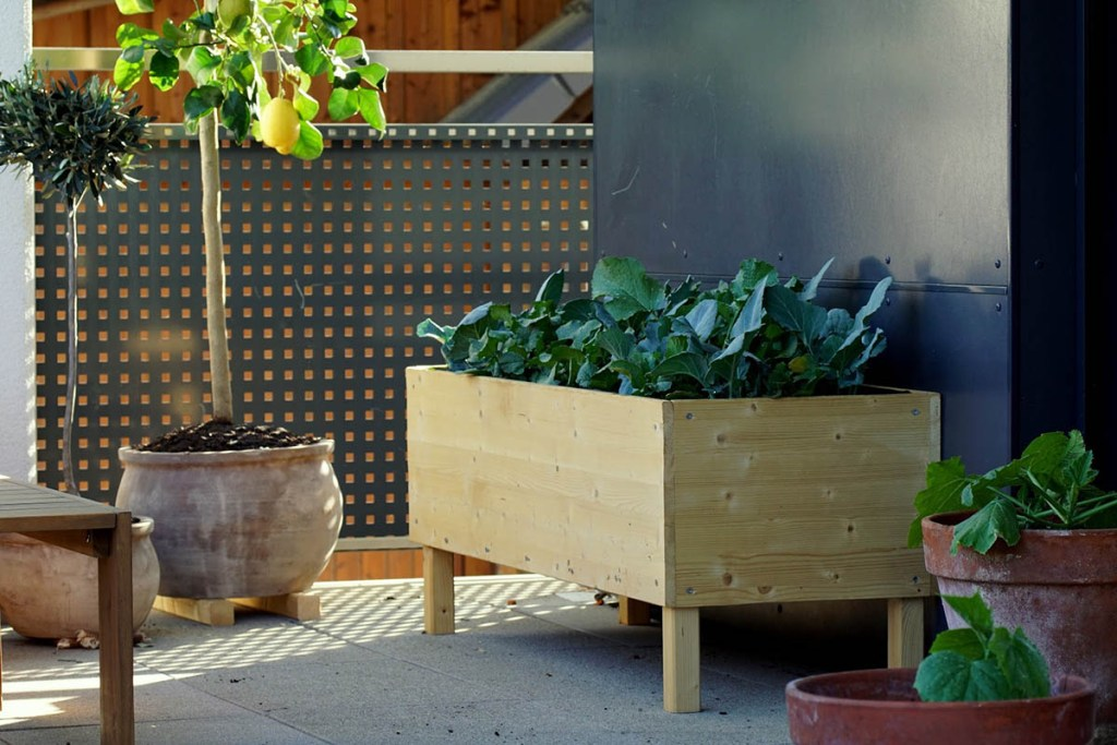 Raised garden beds can be found at the Walmart Garden Center