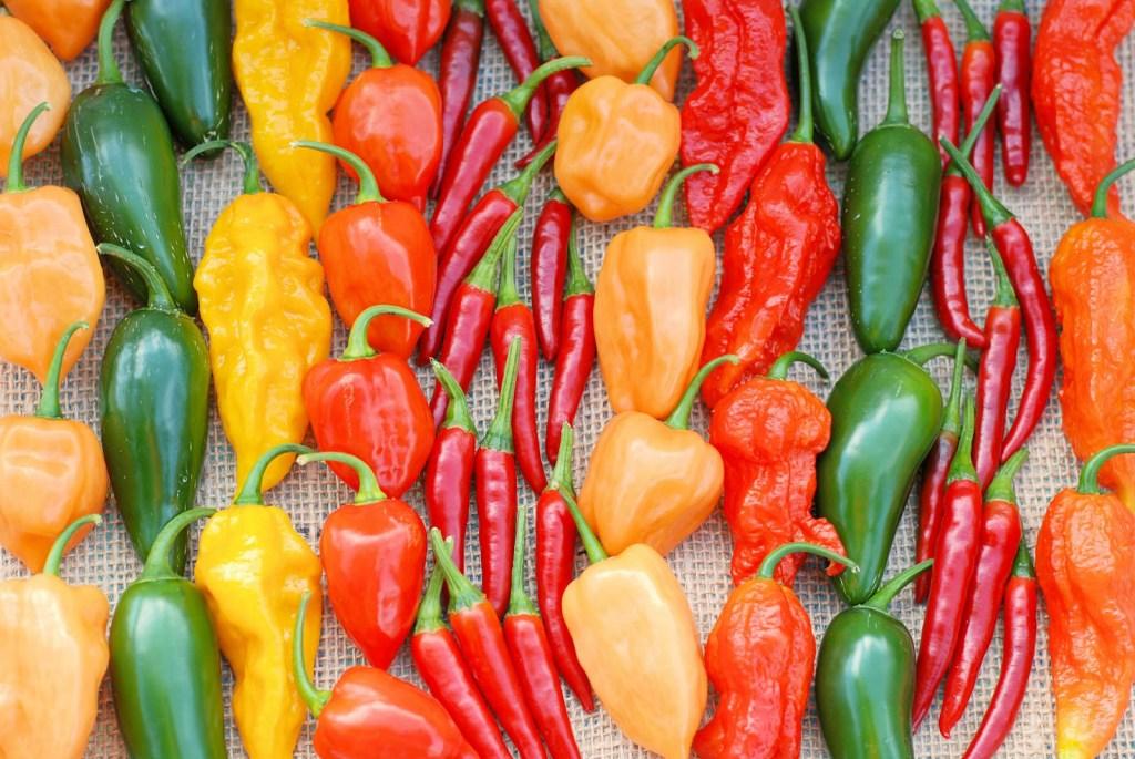 Colorful pepper varieties