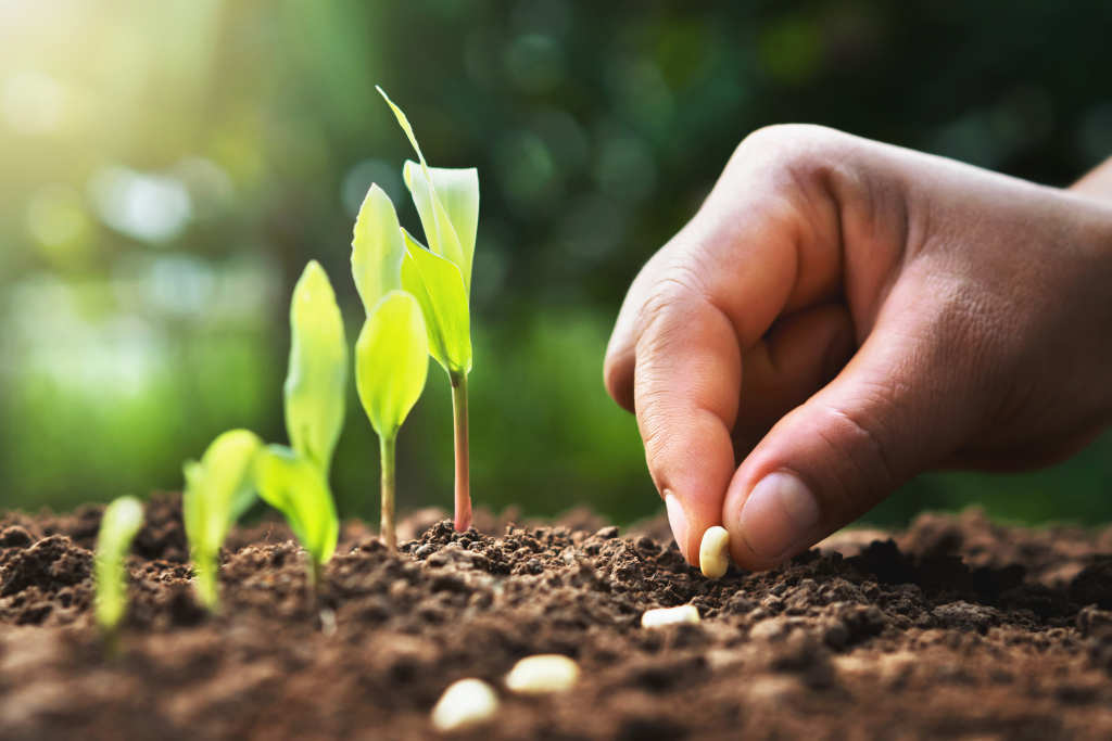 organic seeds: hand planting seeds in soil