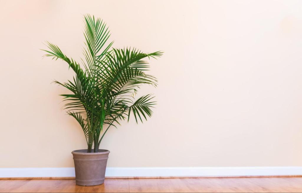 Indoor palm plant in a pot