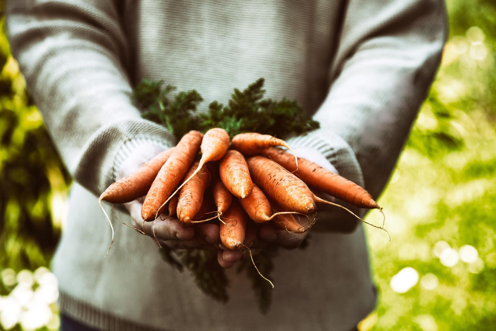 carrot seeds: man holding carrots