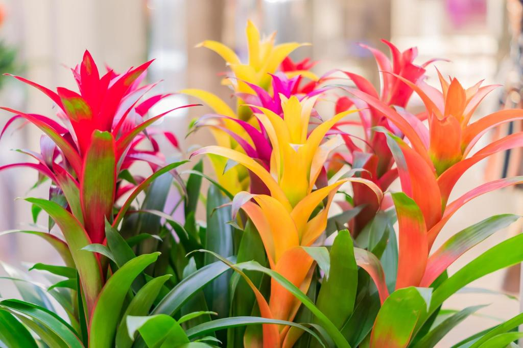 plants safe for cats: Colorful and blooming bromeliad flowers