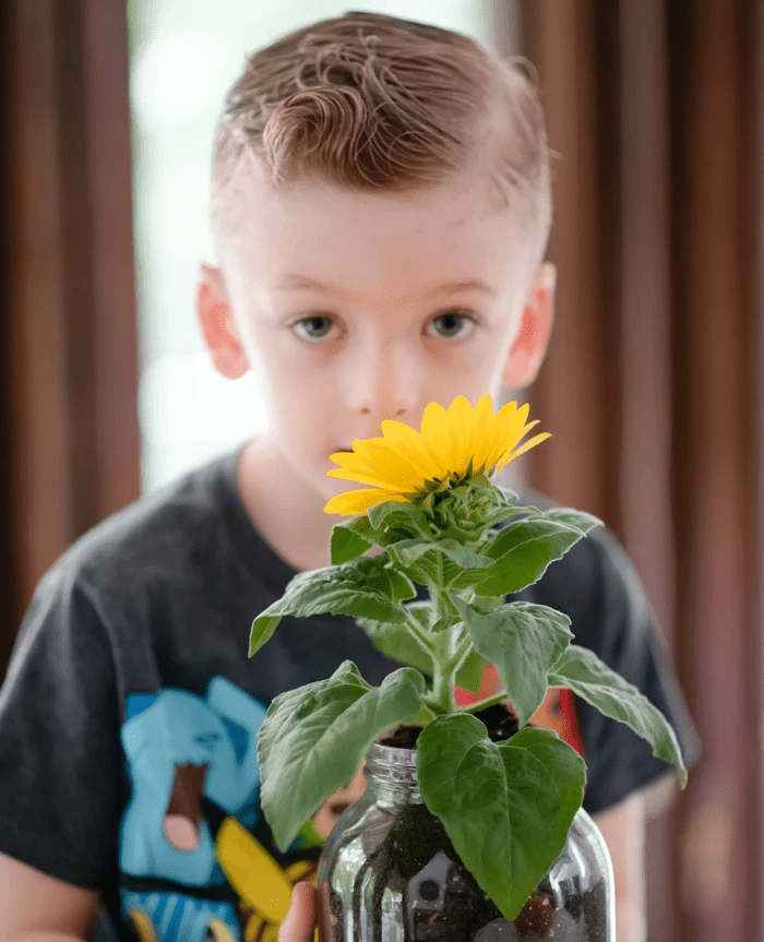 plants safe for cats: Young boy holding a sunflower plant in a glass jar