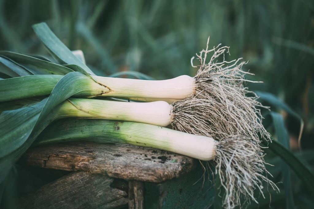 Leeks on top of a wooden table in the garden