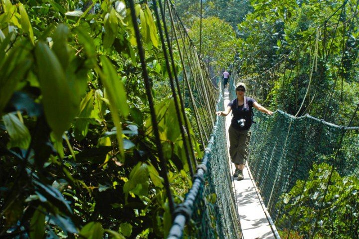 Bridge walk Cameron Highlands