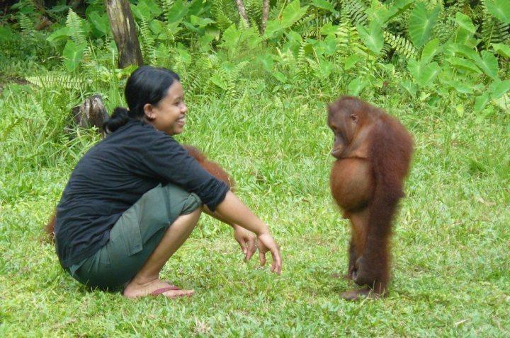 the-standoff-orangutan-outreach