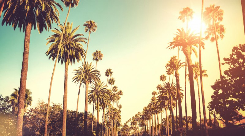 Palm trees along a road in LA