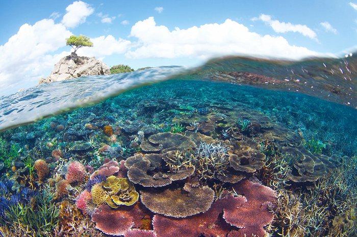 New Malaysia One Million Hectare Marine Park
