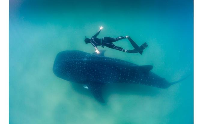 A Whale Shark Adventure in Mexico's Mayan Riviera