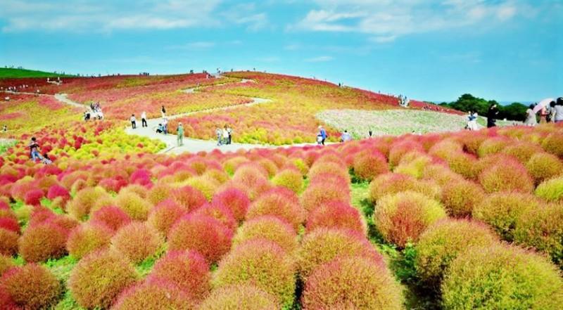 The amazing views over the Kochia Hill landscape - Japanese Mythology