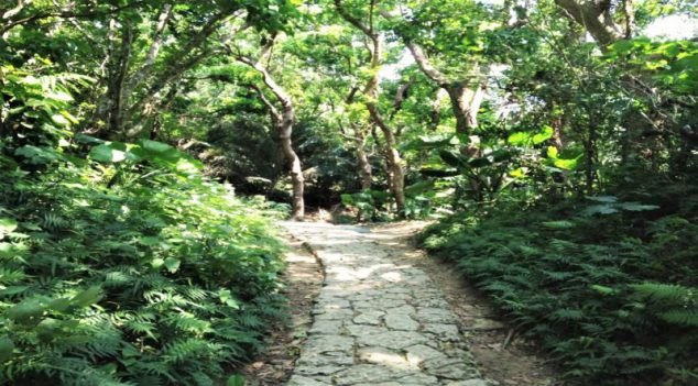 very few people know of this japanese natural wonder: the seifa utaki forest
