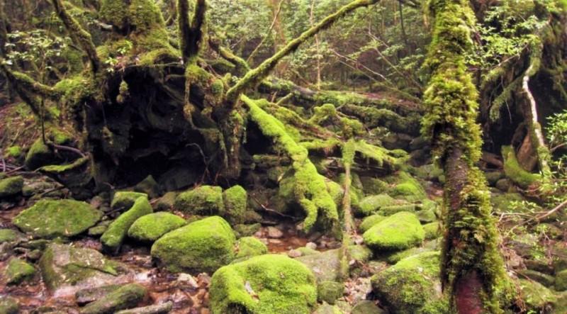 Japan's folklore destination Shiratani Unsuikyo Ravine is famously known to inspire Studio Ghibli