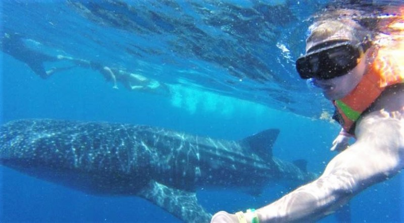 Snorkelling on a Whale Shark Adventure
